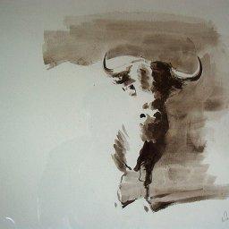 Toro celeste
